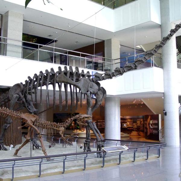 계룡산 자연사박물관 1층 공룡홀 내부(2)