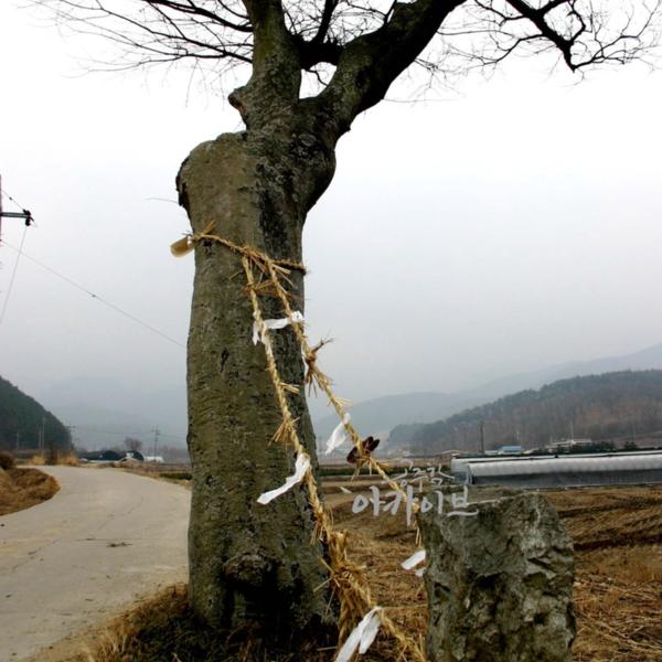 굿과 민간신앙 - 선돌과 당산나무